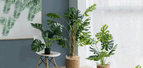 خرید اینترنتی گل و گیاه؛ بهترین انتخاب آنلاین برای شما